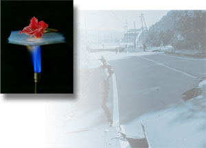 A flower lying on a piece of Aerogel being held over a flame; a buckled road after an earthquake in Chuetsu, Japan.