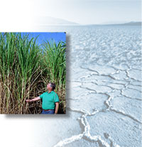 A man standing next to a field of agrofuels; dry earth.